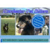 Personalized dog walking - Family owned and operated